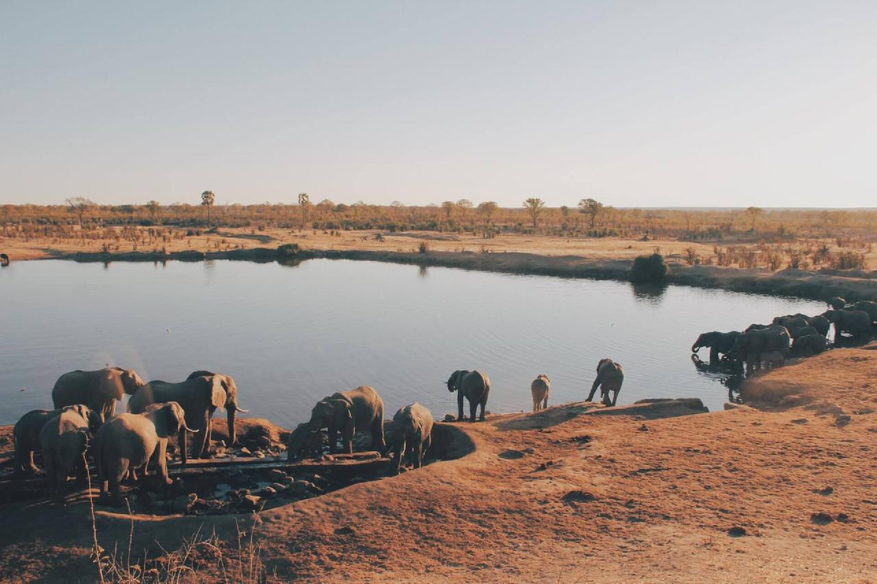 Tag på safari i Afrika